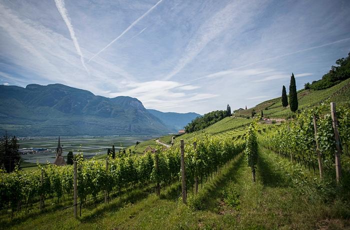 Wein aus Höhenlagen in Südtirol