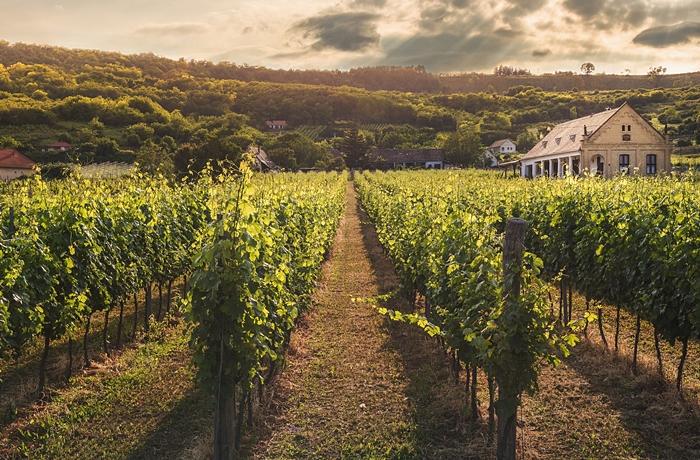 Weinreisen in romantische Anwesen in Naturidylle.