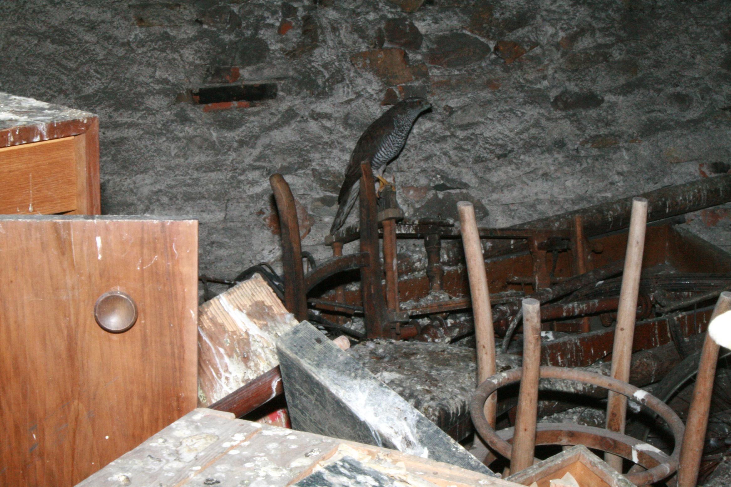 Auf dem Dachboden des Niedermairhof wartete so manche Überraschung.
