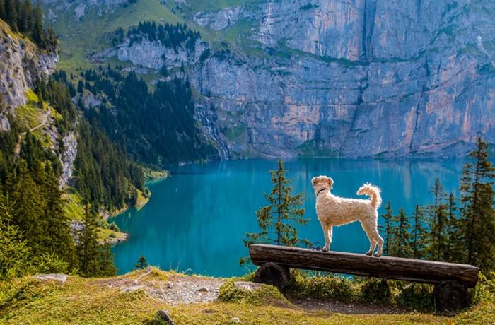 Weißer Hund schaut auf einen Bergsee